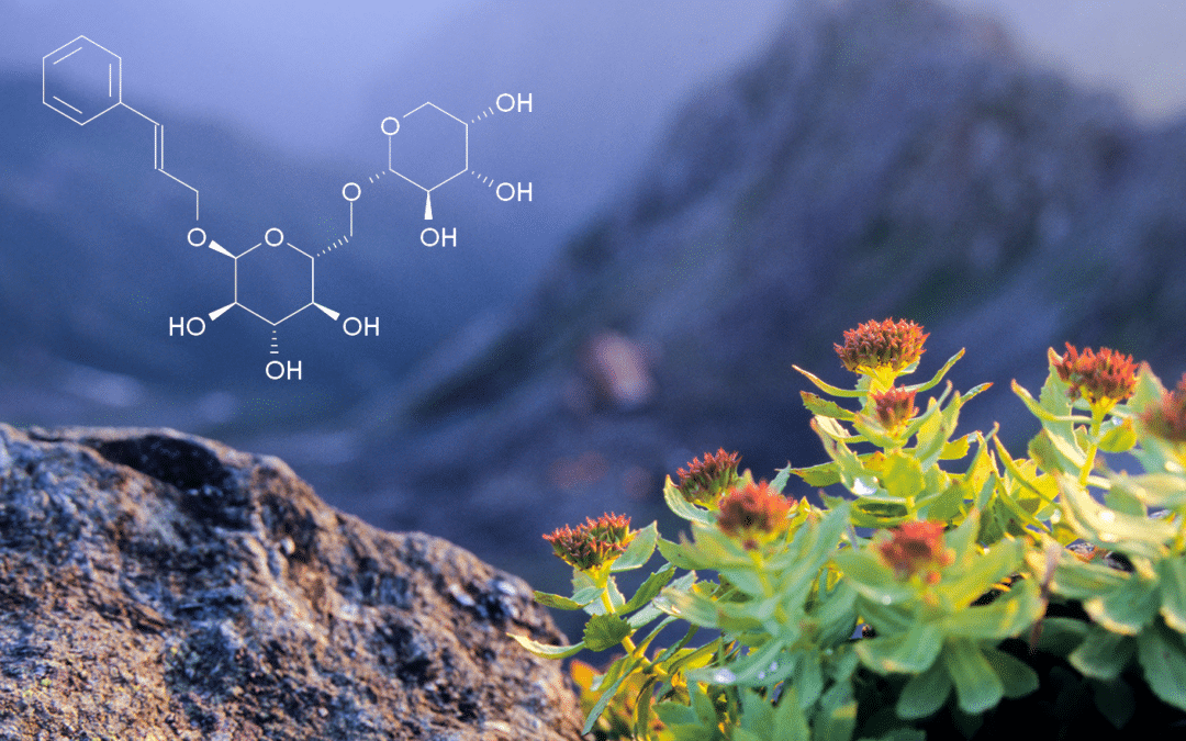 Rhodiola Rosea: the Science behind the Legend