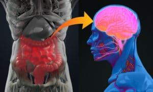 brain of the gut anatomy