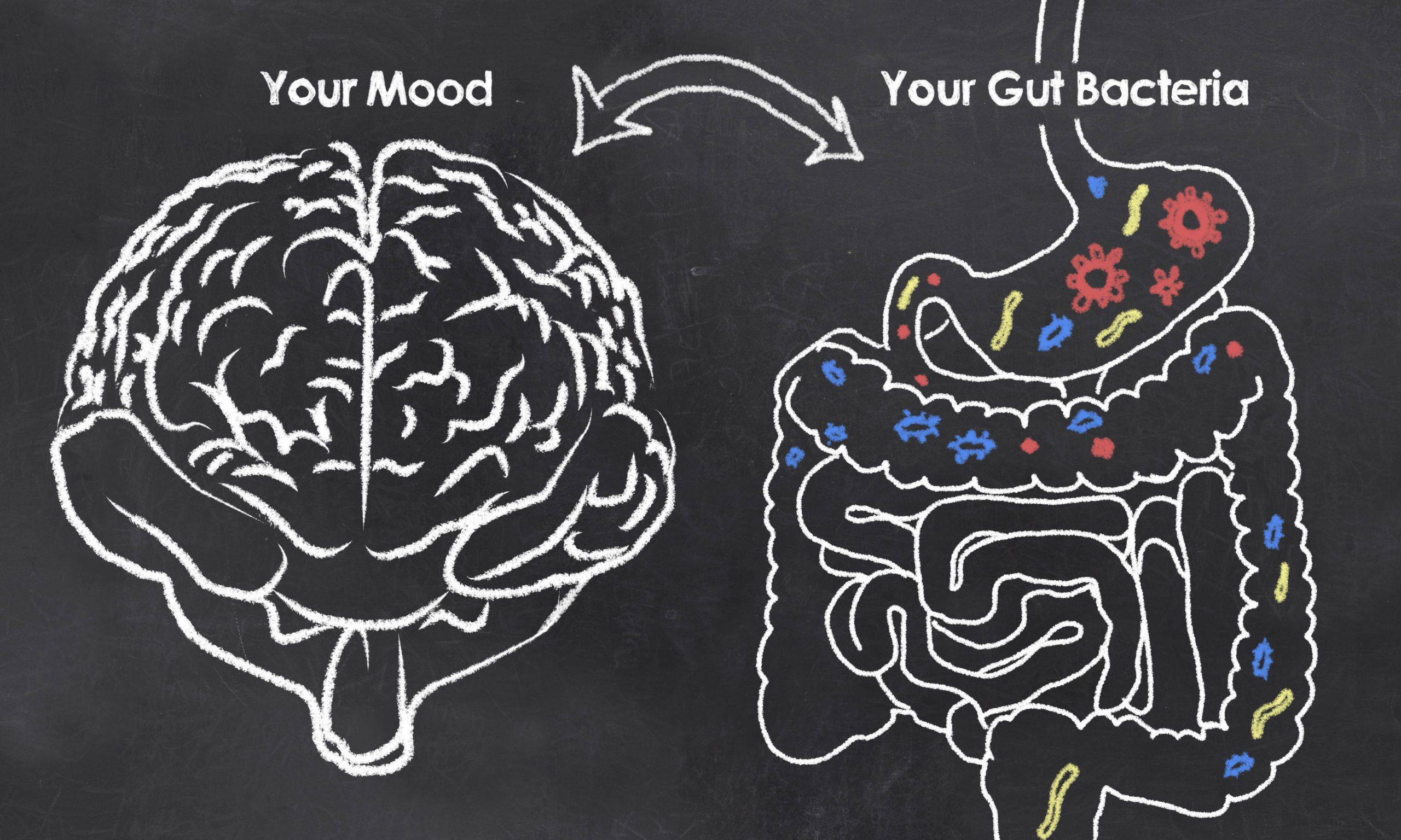 intestinal flora and emotional health