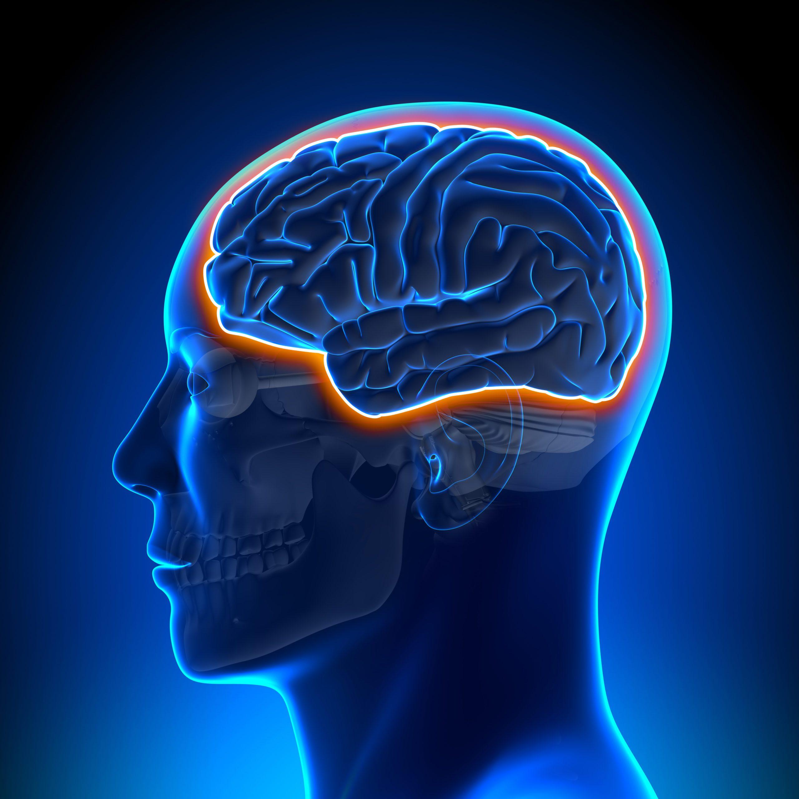 blood brain barrier macro